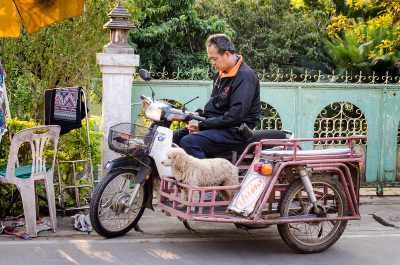 A man on a scooter with his dog in the side car.