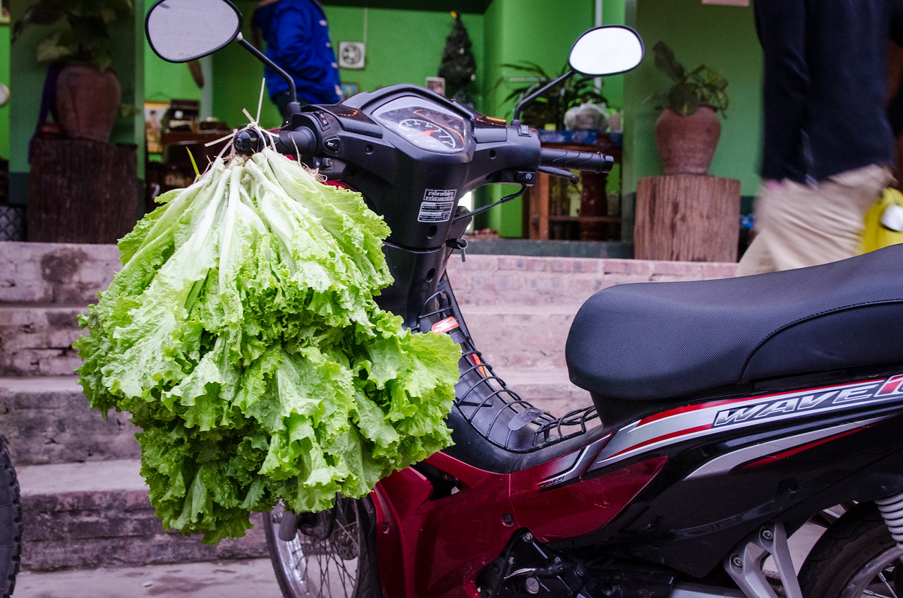 Bringing home some lettuce on the scooter.