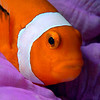 070929_Nemo15
