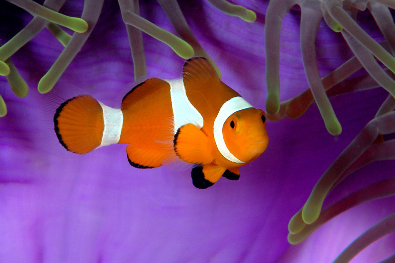 071003_Nemo1l