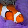 070929_Nemo07