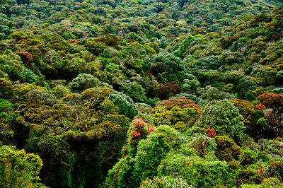 Cameron Highlands - rainforest