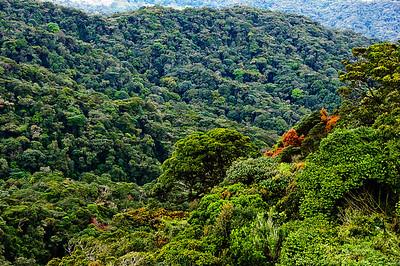 Cameron Highlands - rainforest