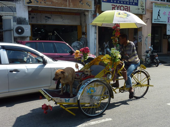 Dogs on a Trishaw - Penang