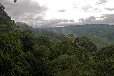 View from Canopy of the surrounding rainforest in Kinabalu National Park, Sabah, Malaysia
