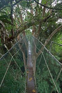 Narrow bridge during canopy walk at Kinabalu National Park, Sabah, Malaysia