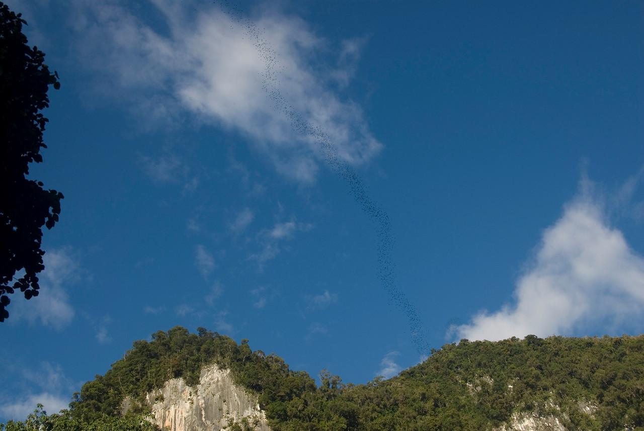 Bats Leaving Deer Cave spotted at Mulu National Park - Sarawak Malaysia