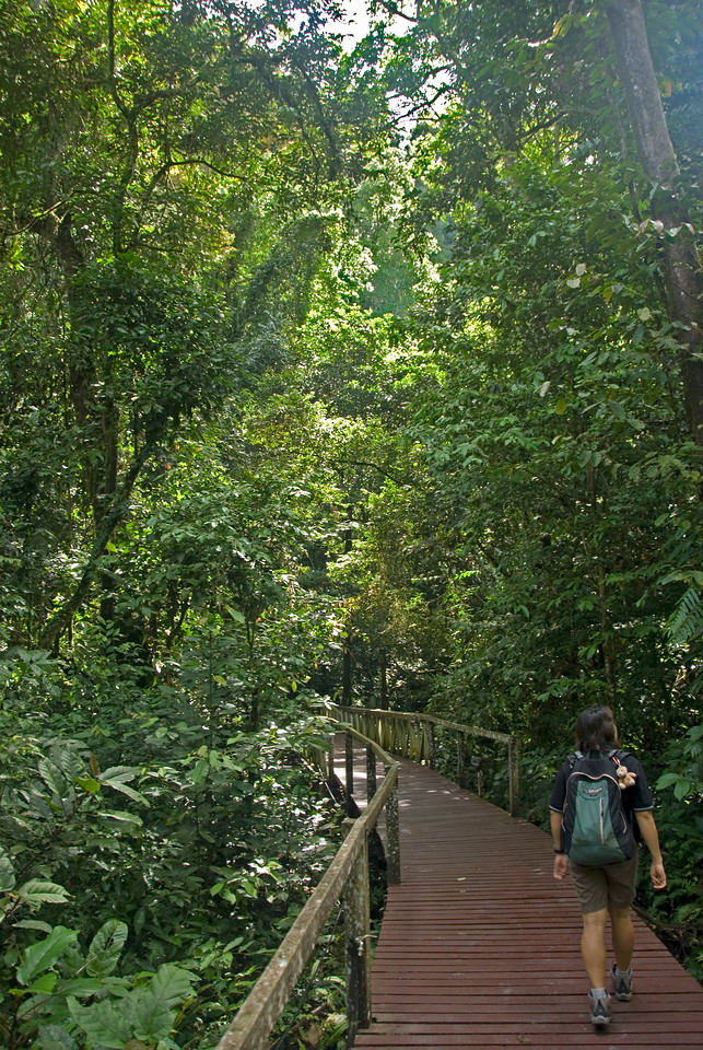 Forest Trail in the middle of rainforest at Mulu National Park - Sarawak, Malaysia