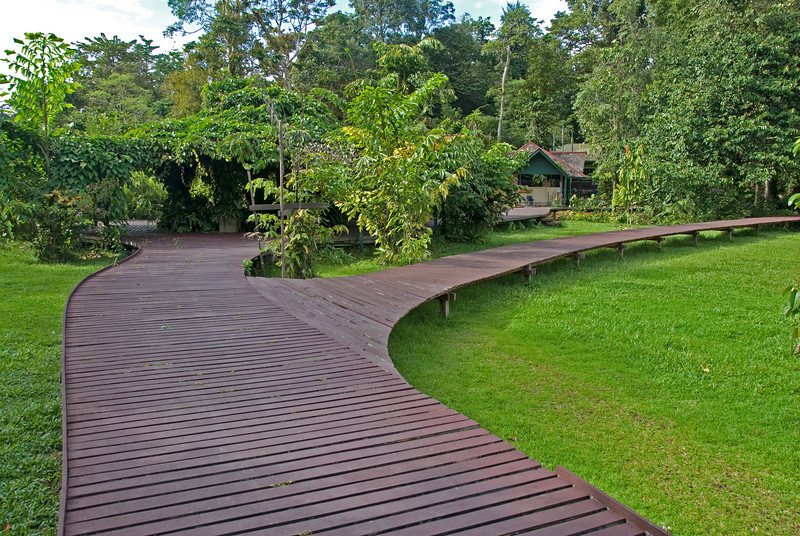 Boardwalk going on two different paths in Mulu National Park - Sarawak, Malaysia