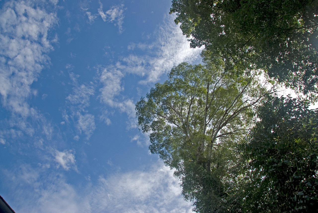 Enhanced photo of tree tops and blue sky at Mulu National Park - Sarawak, National Park