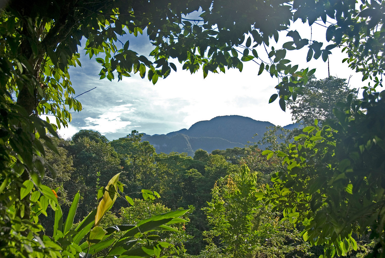 Overlooking view of the forest canopy and mountain at Mulu National Park