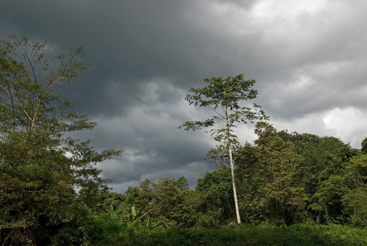 Dark, storm clouds forming over canopy in Mulu National Park - Sarawak, Malaysia