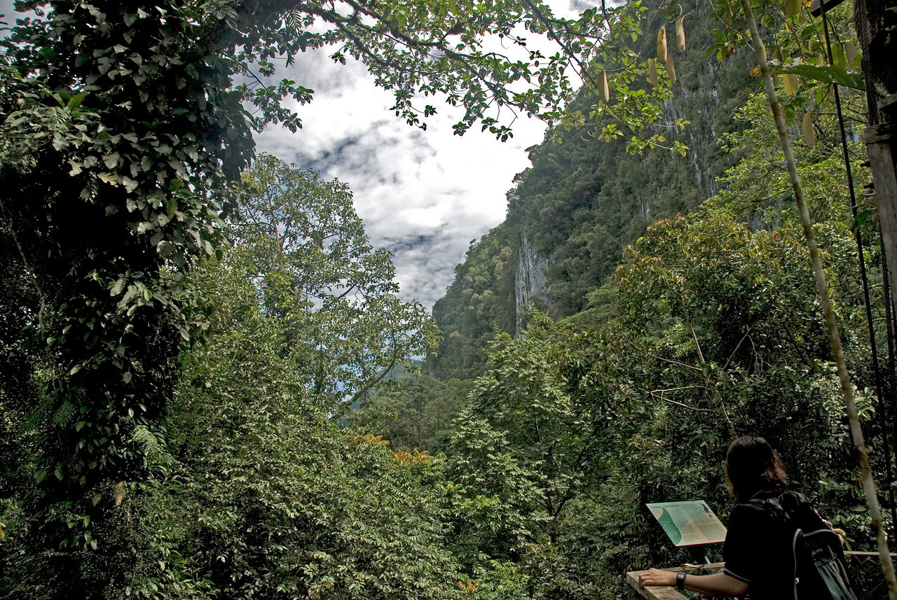 View of the mountain and thick rainforest canopy at Mulu National Park - Sarawak, Malaysia