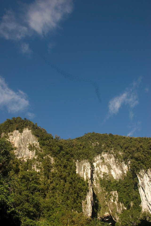River of bats leaving mouth of cave at Mulu National Park - Sarawak Malaysia