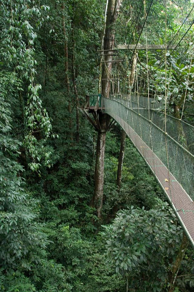 The Canopy Walkway inside the Mulu National Park - Sarawak, Malaysia