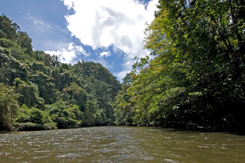 Calm river and thick rainforest at the Mulu National Park - Sarawak, Malaysia