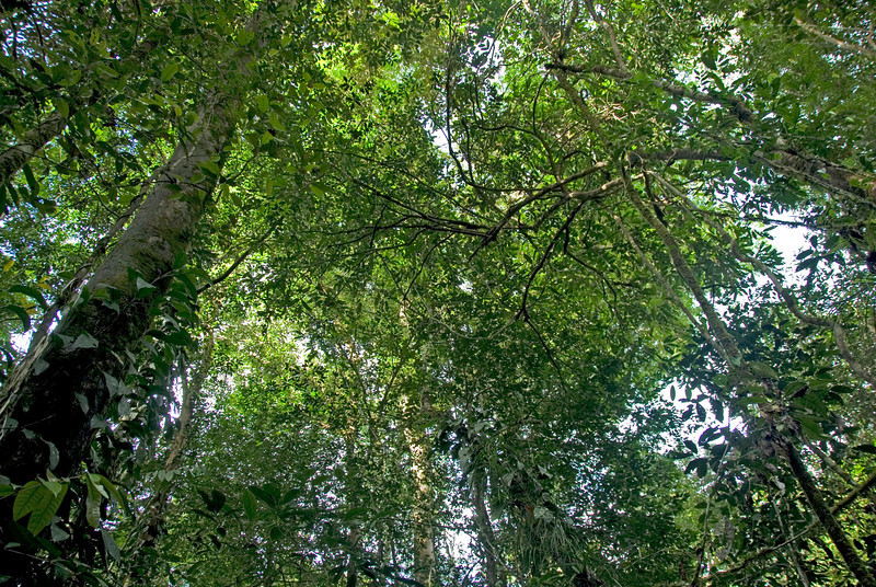 Shot of the forest canopy in Mulu National Park - Sarawak, Malaysia