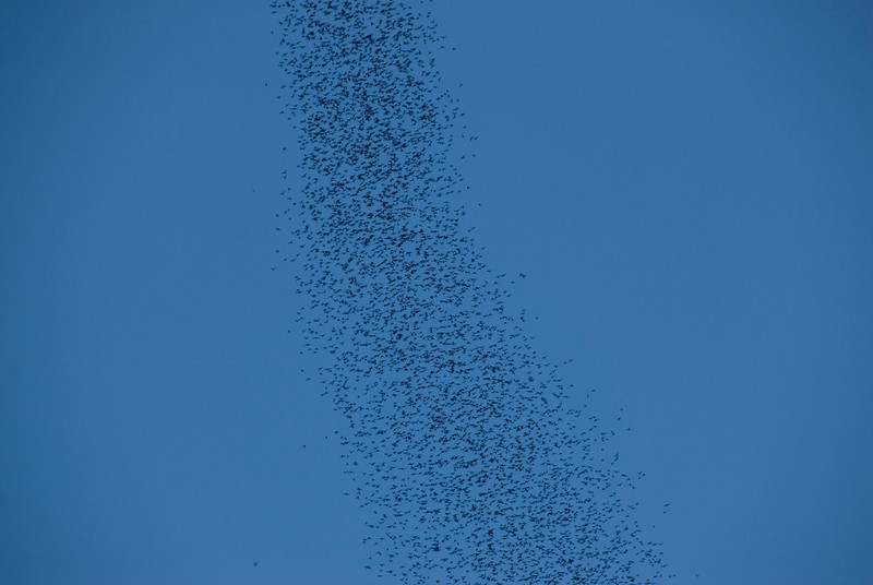 Closer shot of the bat swarm above Mulu National Park - Sarawak Malaysia