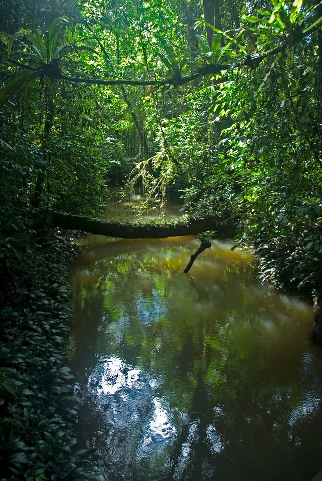 Murky pond in the middle of rainforest in Mulu National Park in Sarawak, Malaysia