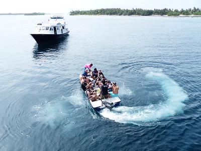 The (very full!) dingy was enlisted to get people out to the whale shark. Naaoi, a 6 meter male, was spotted.