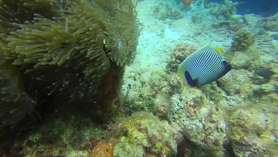 Compilation from various dive sites
