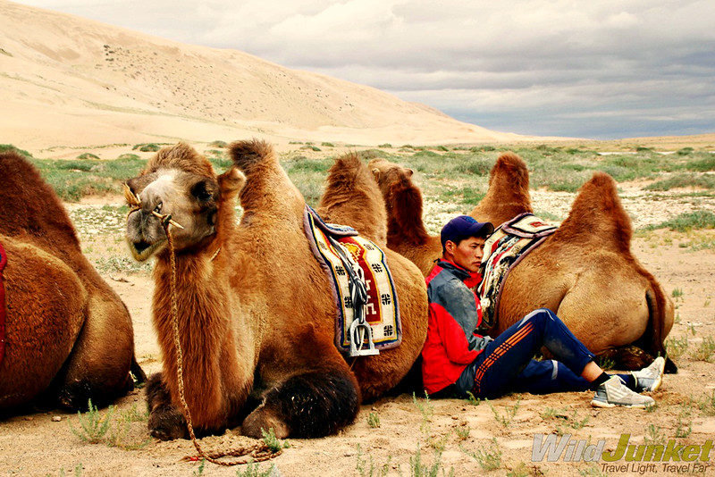 Young camel guide and his camels