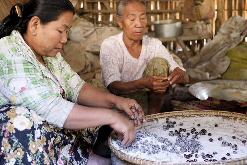 Several women work diligently to prepare the sour plum sugar candies in Bagan, Burma (Myanmar)