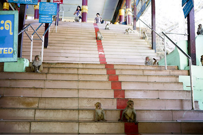 The many steps and monkeys we had to battle to reach Popa Taungkalat Shrine on Mt Popa in Bagan, Burma (Myanmar)