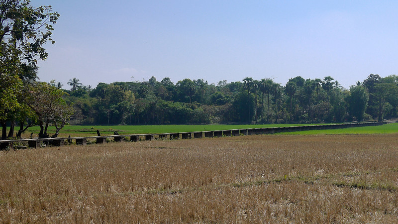 A bridge through the dried out rice paddy in Hpa-An, Burma.