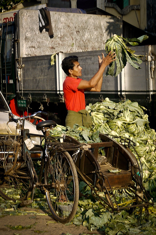 A trishaw driver fills his bike with lettuce cargo for transport in Hpa-An, Burma.