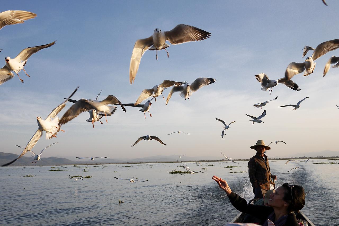 Seagulls at Inle Lake, Burma (Myanmar).