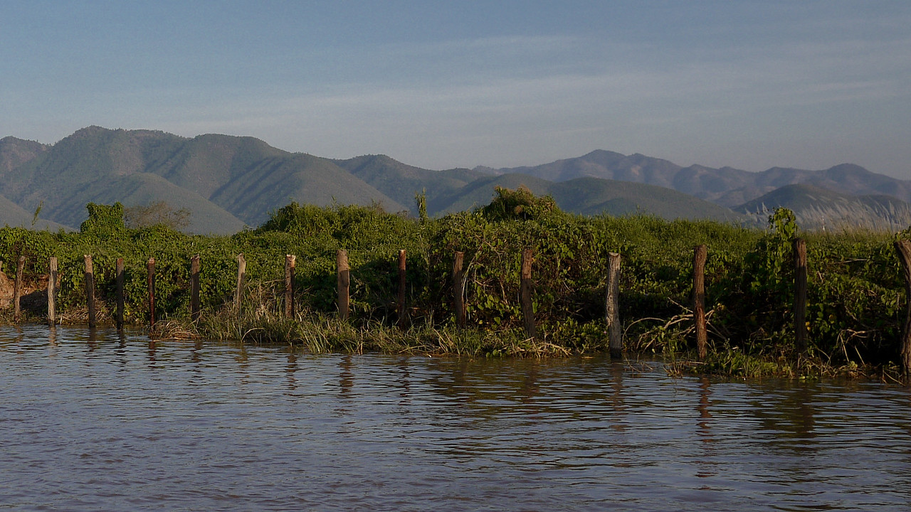 Dense vegetation and the floating gardens of Inle Lake, Burma (Myanmar).
