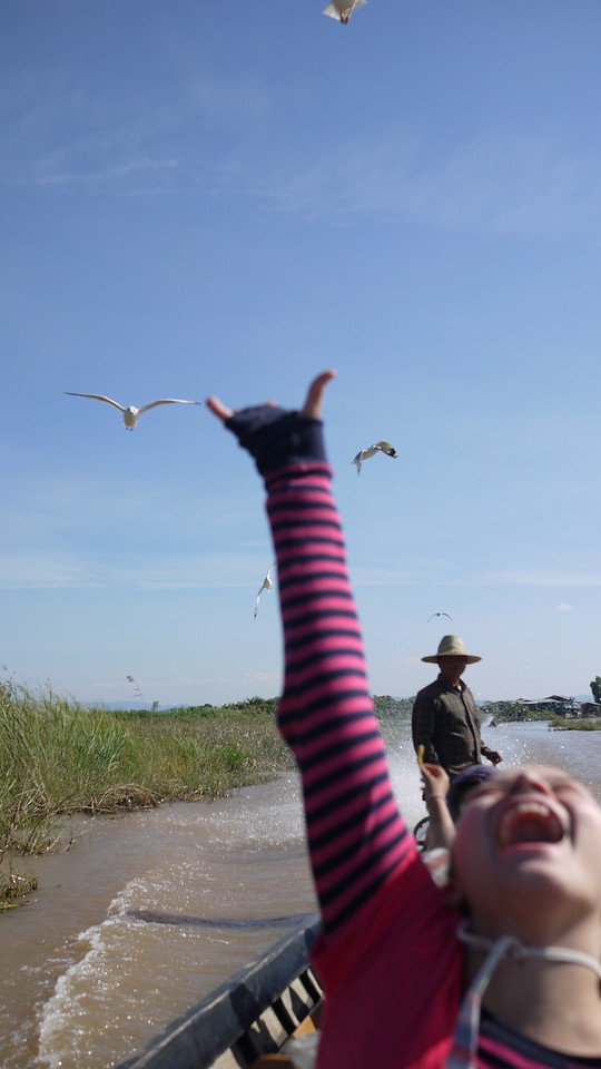 Ana feeds the seagulls on Inle Lake, Burma (Myanmar).