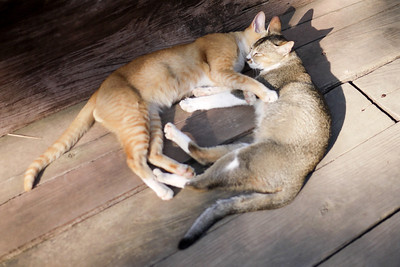 Two cats cuddle at the teak monastery on Innwa near Mandalay.