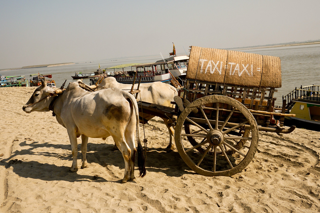 An ox cart works as a taxi for those looking to take in Mingun temple, the bell and the other sites.