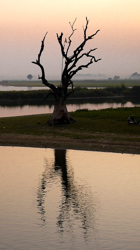 A beautiful tree reflects in the water as the sun sets over U Bein Bridge, Mandalay, Myanmar.