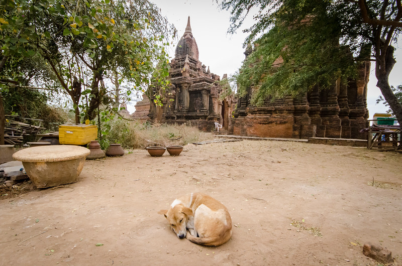 Sleeping dog, Bagan.