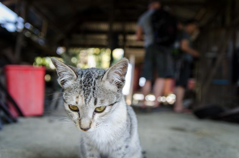 Blacksmith cat!