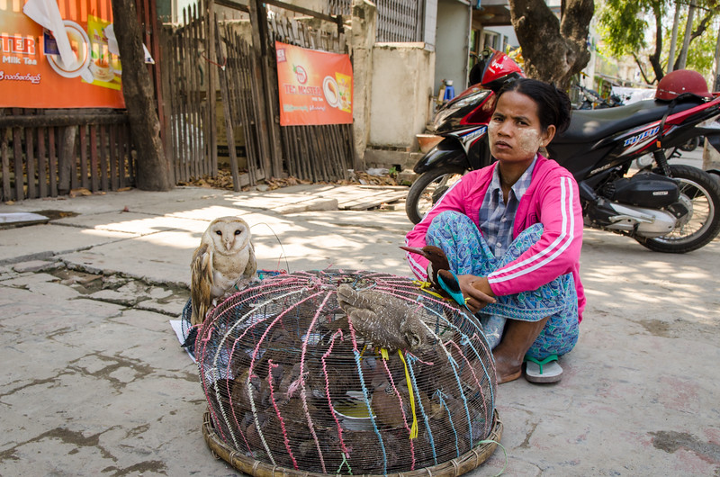 """This is a sad sight.  People capture wild and exotic birds and sell them on the street.  It is """"good luck"""" to buy the birds and set them free."""