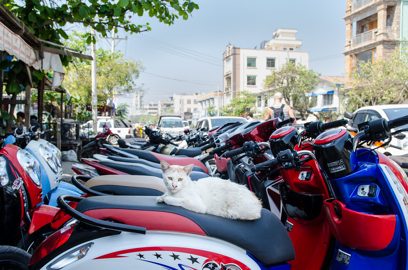 Scooter cat.