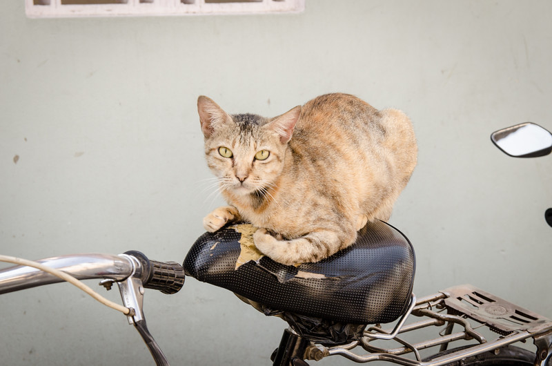 Yes, this is my bike.