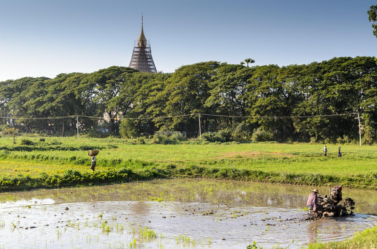 Man working in a rice paddy, Inwa, Myanmar.