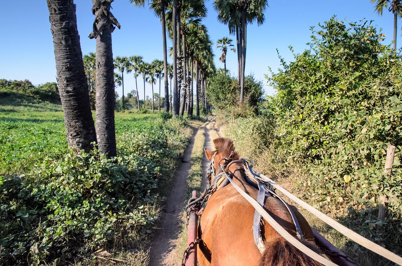 A horse cart ride through palm trees in Inwa, Myanmar.