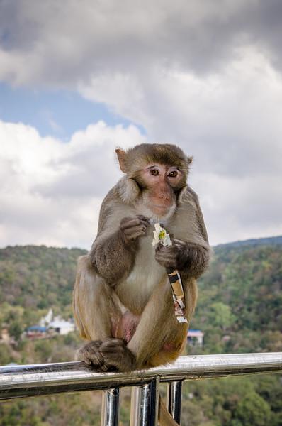 The monkeys are big moochers.