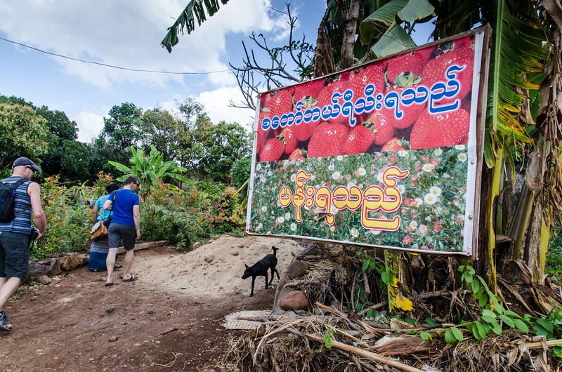 On our way back to Bagan we stopped at a strawberry farm.