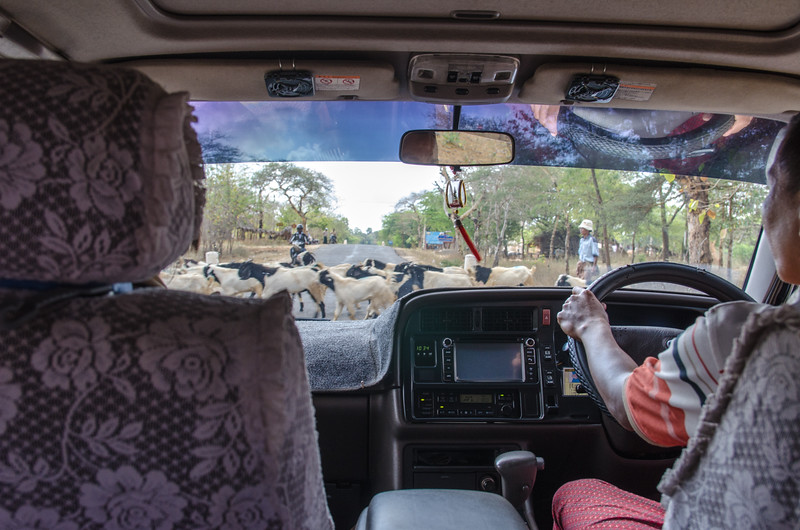 Traffic jam, Myanmar style!  We're on our way to Mt Popa.
