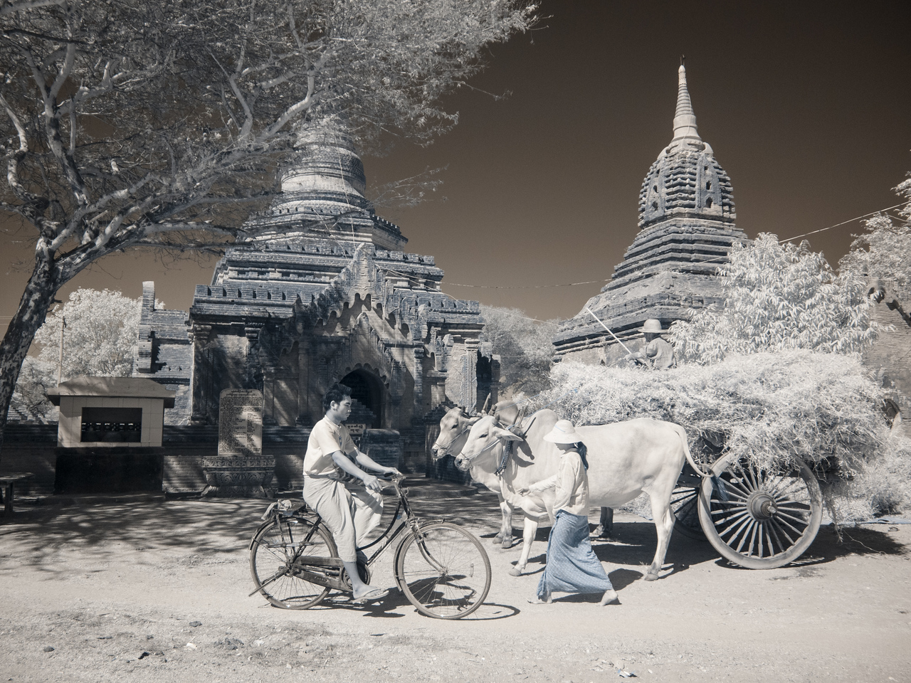 Bagan with Ox and Bike