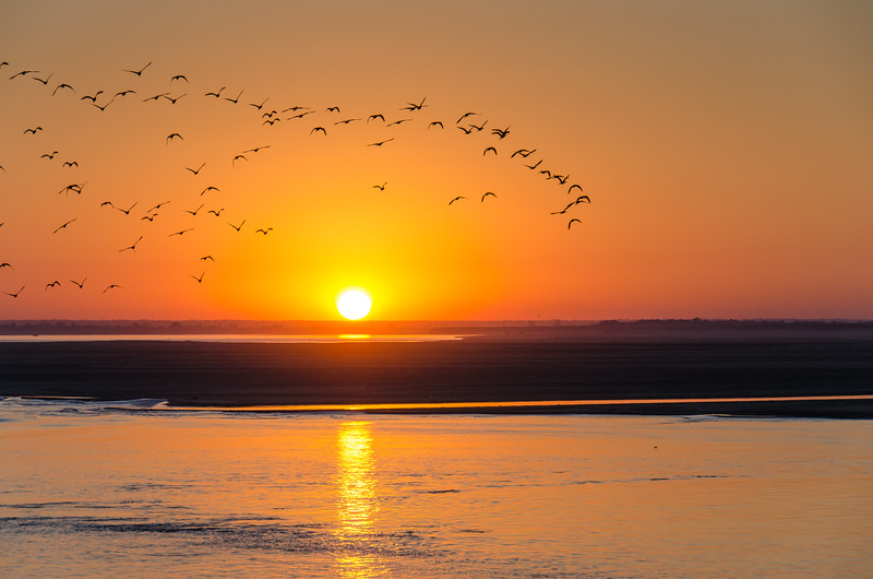 Birds pass at sunset on the Irrawaddy as we approach The Inwa Bridge.