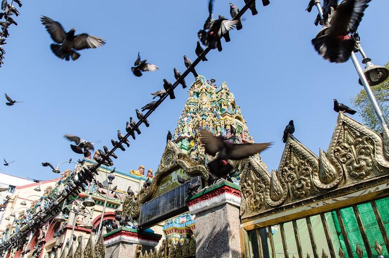 So many pigeons!