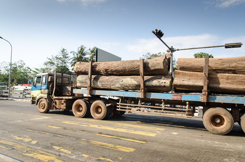 A truck loaded with giant teak logs.